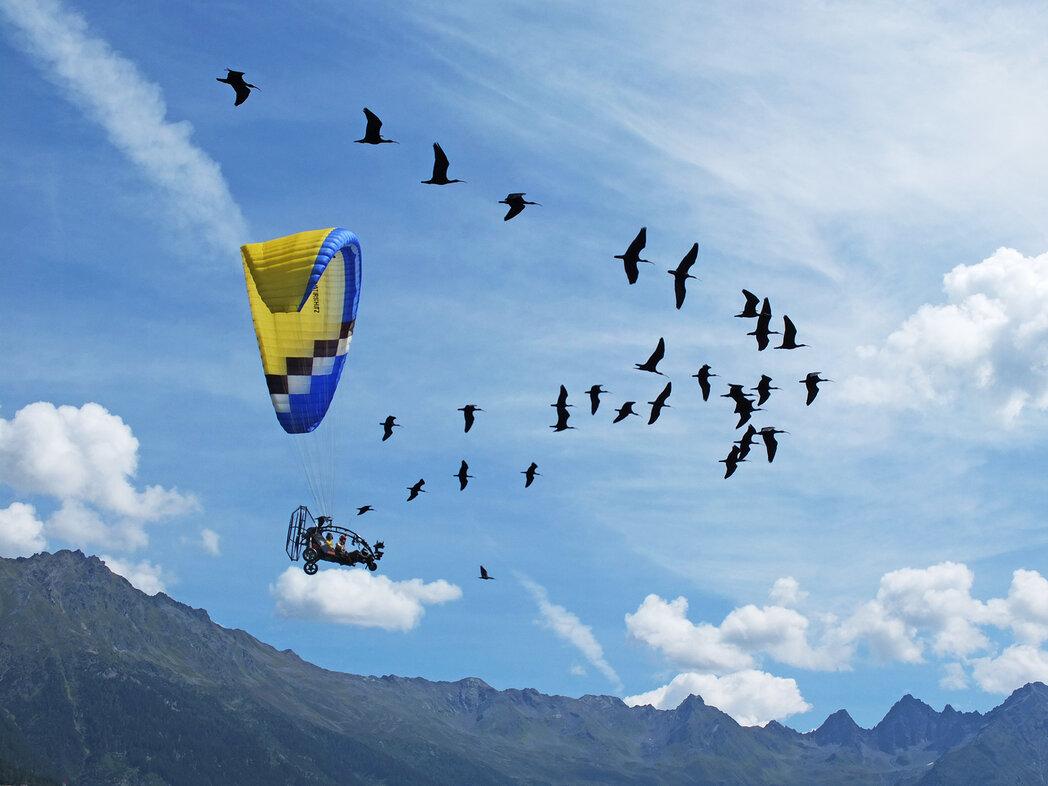 Ultraleicht-Fluggeräte fliegt mit den Waldrappen